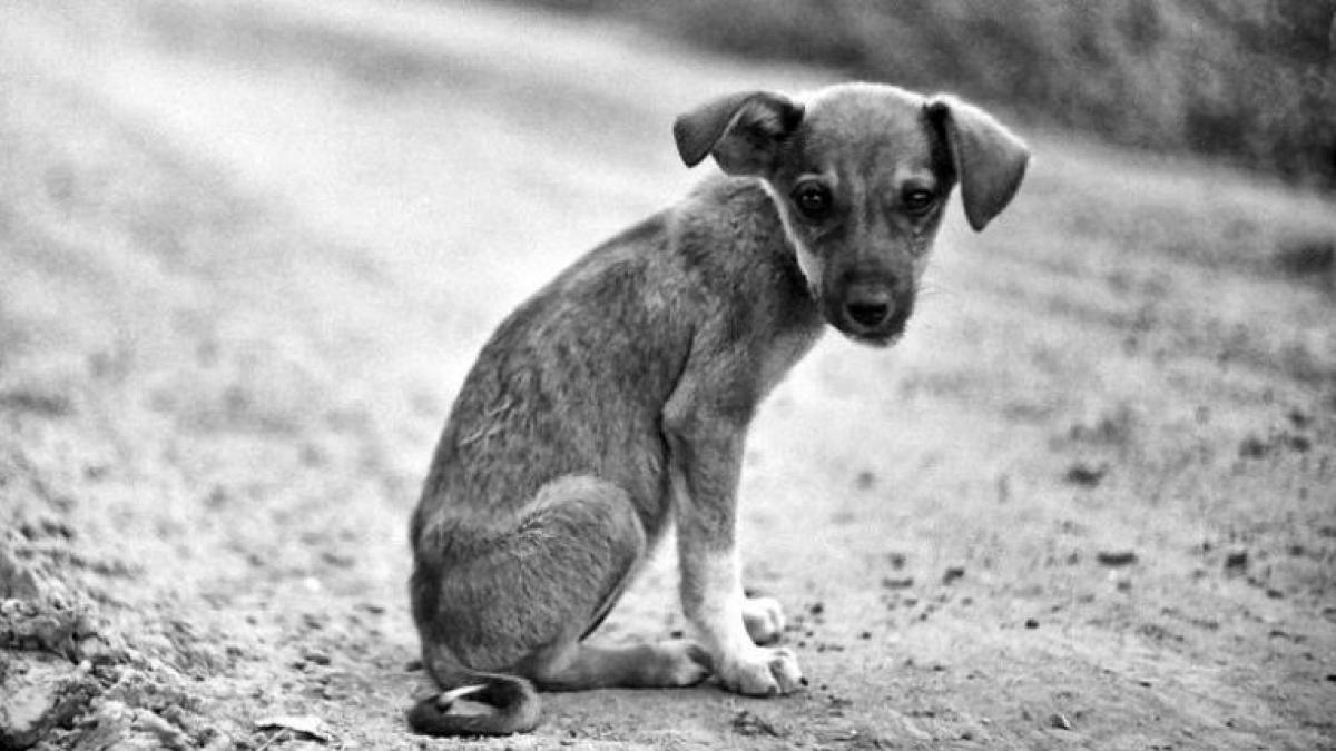 La sangrienta campaña para un Mundial sin perros callejeros | Noticias de  Sociedad en Heraldo.es
