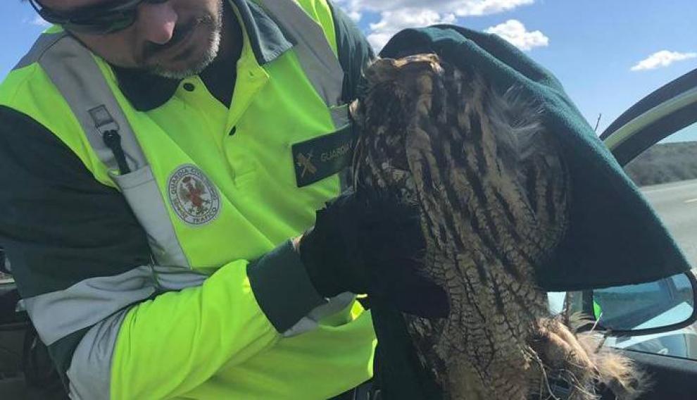 Los agentes auxiliando al búho, apunto de trasladarlo al Centro de Recuperación de Aves de la Alfranca.
