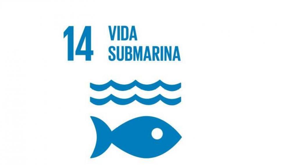 Objetivo 14: vida submarina.