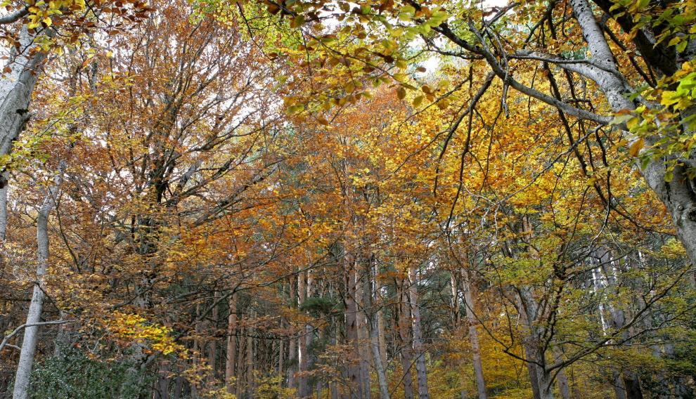 El papel de los bosques contra el cambio climático es fundamental.