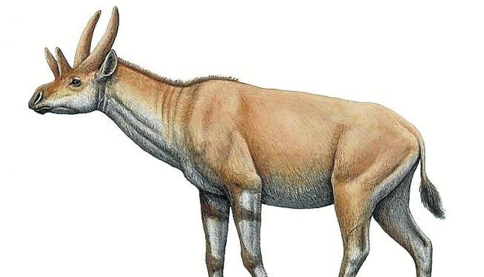 Jirafa prehistórica.