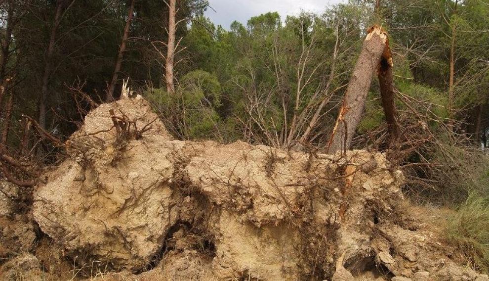 Los fuertes vientos también derribaron numerosos árboles.