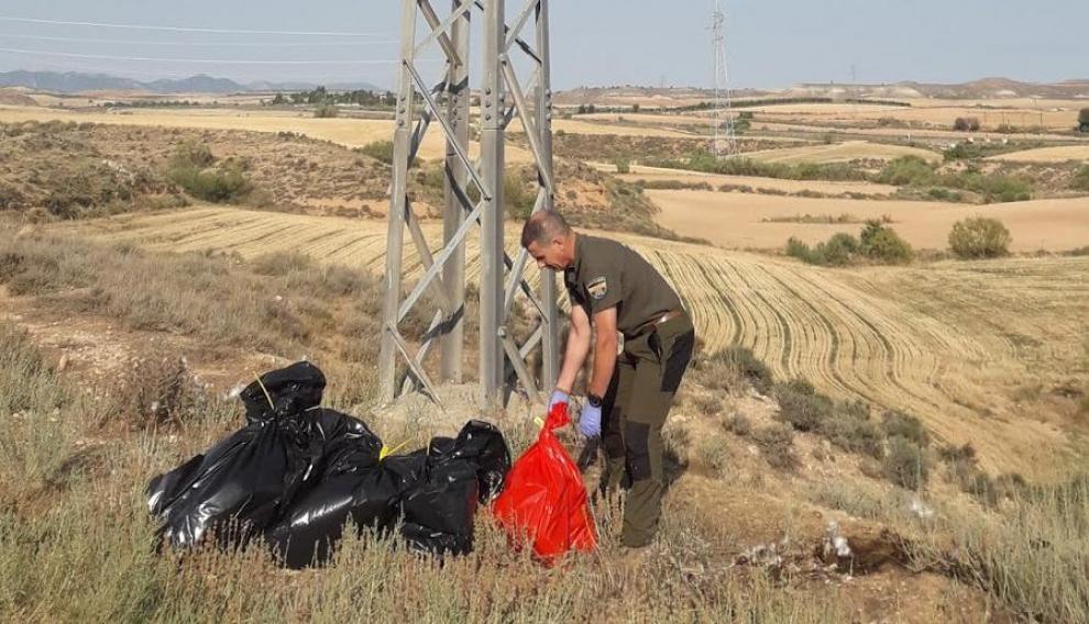 La mayor parte de las muertes de aves por electrocucion son detectadas por los agentes de protección de la naturaleza del Gobierno de Aragón, que revisan los tendidos en busca de bajas.