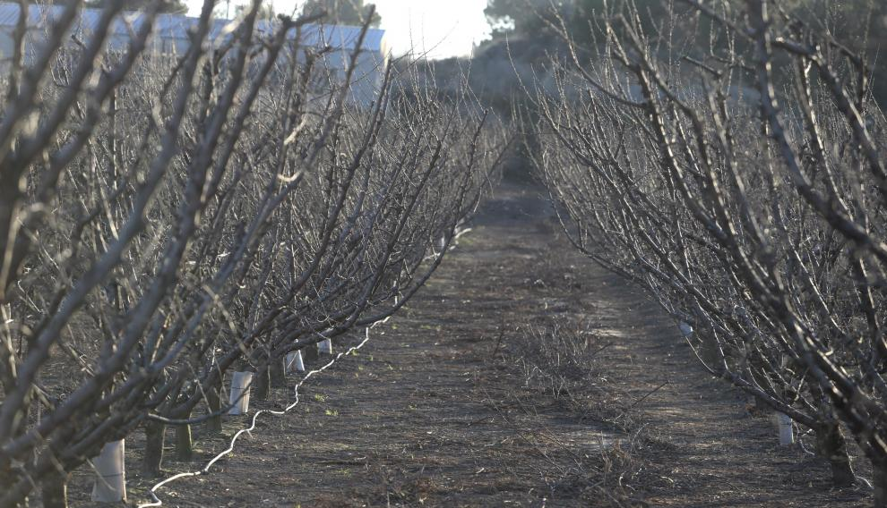 Una explotación de árboles frutales en Fraga.
