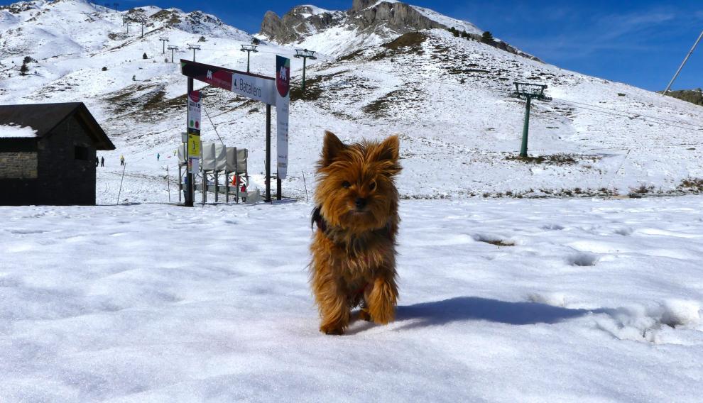 Nika, en la estación de Formingal disfrutando de la nieve.