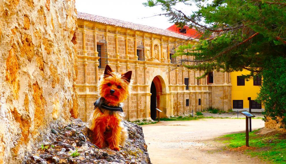 La perrita viajera, en el Monasterio de Piedra.