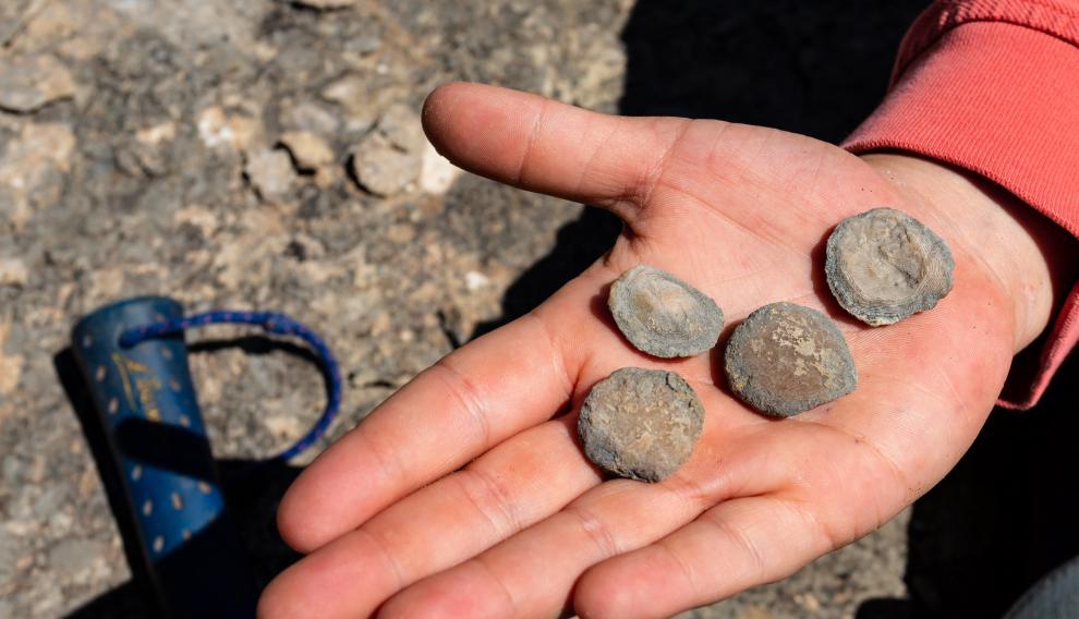 Fósiles localizados en la sierra de Guara, dentro de la comarca de Sobrarbe.