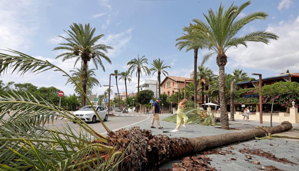 El temporal de lluvia ha provocado inundaciones, derrumbes y caída de palmeras siendo la población de Vilanova i la Geltrú y su paseo marítimo los más afectados.