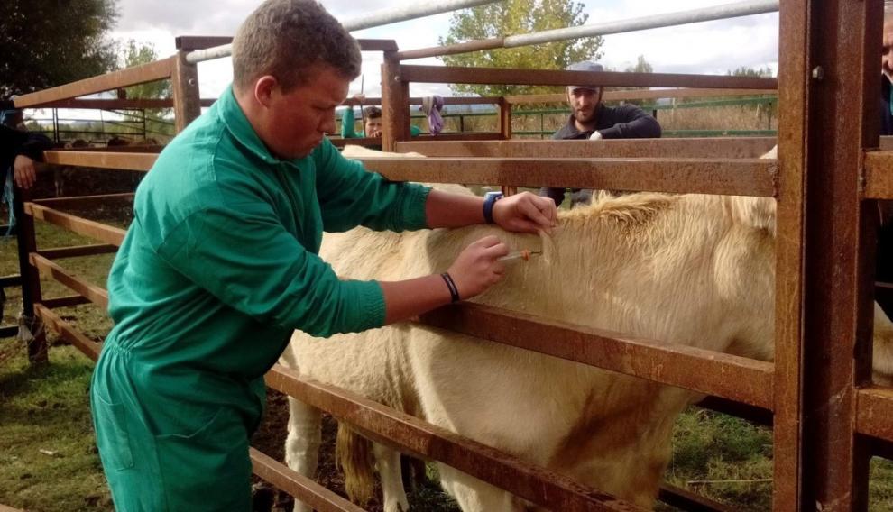 Prácticas de ganadería en el centro de FP San Blas de Teruel.