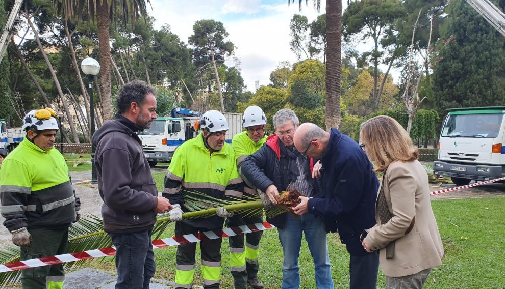 Parques y Jardines del Ayuntamiento de Zaragoza se están encargando de las labores.