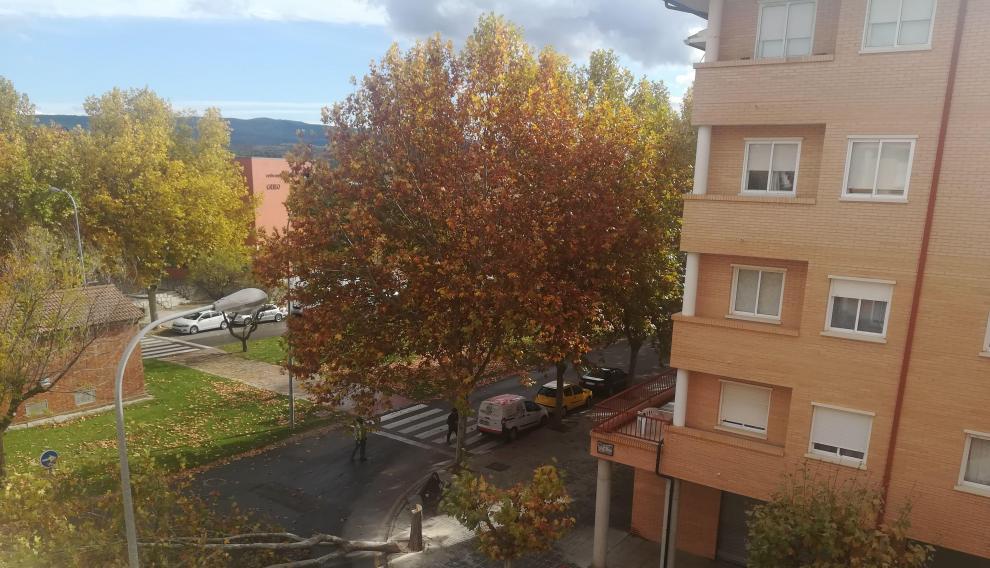 Los árboles dañados en Teruel habían adquirido una altura de más de 20 metros