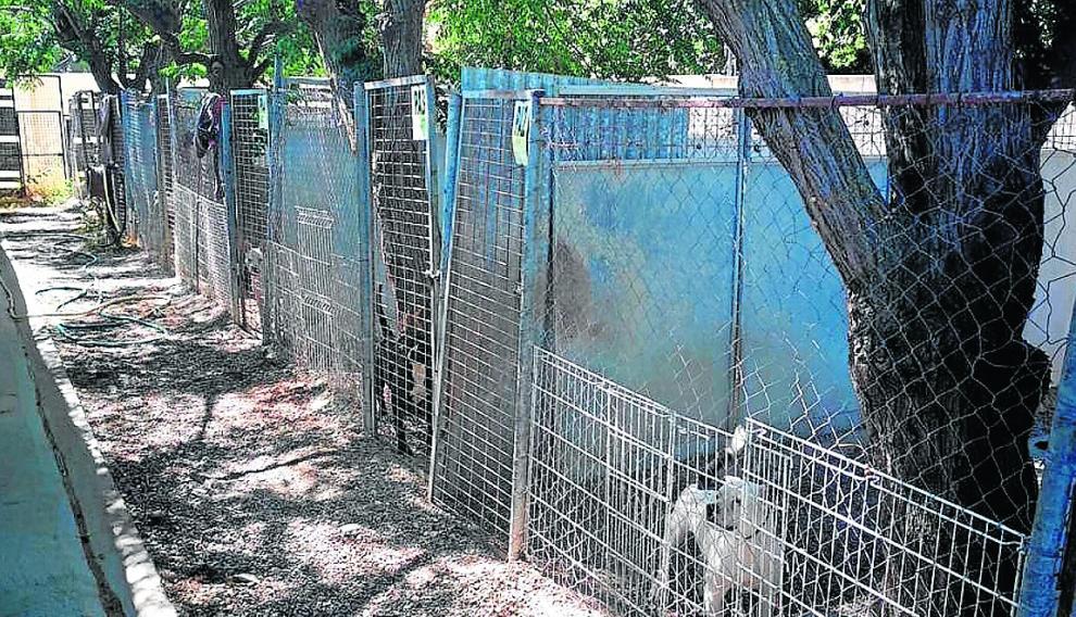 """La """"desfasada"""" perrera de Peñaflor. El actual CMPA lleva tiempo esperando el traslado a las nuevas instalaciones de La Cartuja porque no reúne las condiciones adecuadas, falta personal y está saturado."""