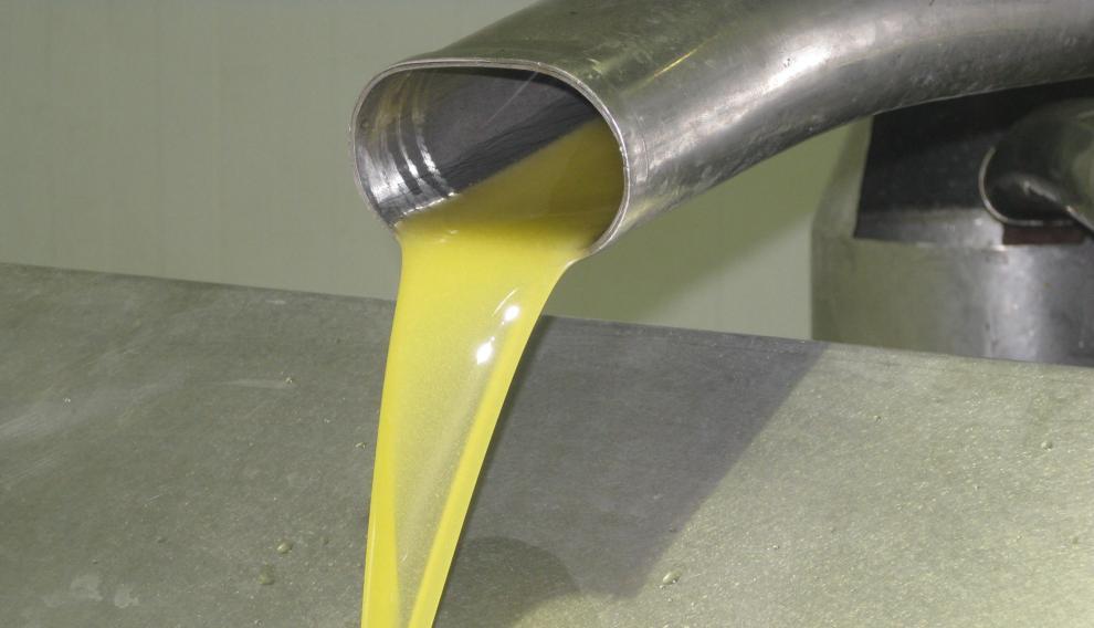 Decantación de aceite de oliva en la almazara de Aceites Impelte del Bajo Martín.