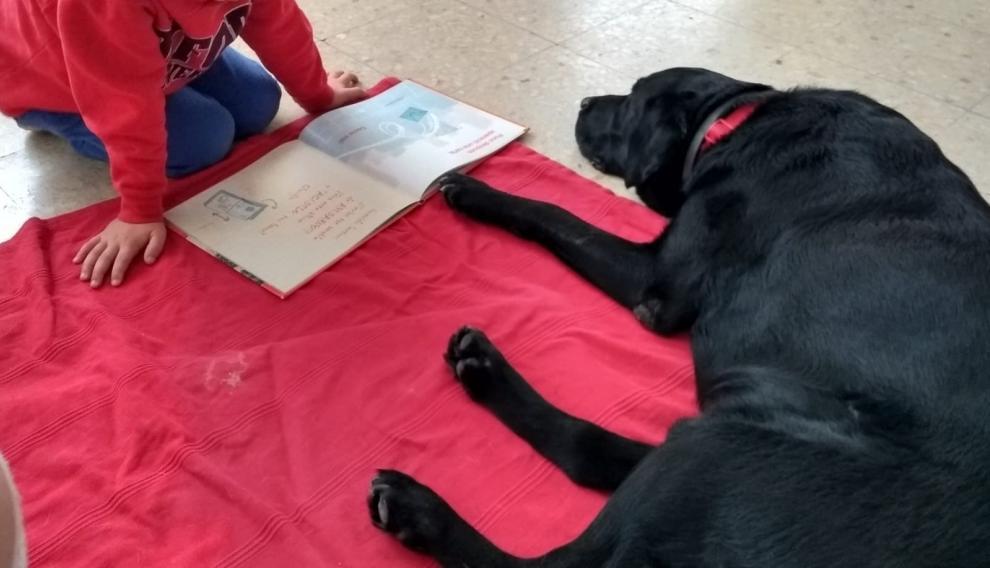 Iniciativa forma parte del programa Perros y Letras – R.E.A.D. España