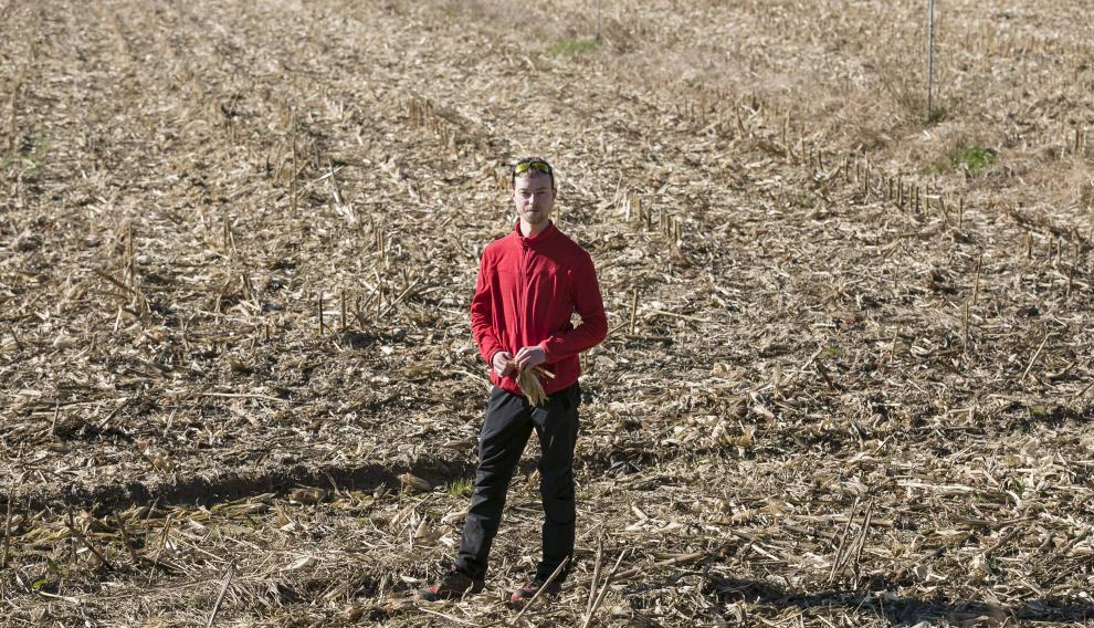 El maíz tiñe en gran medida de las tierras de Sodeto.