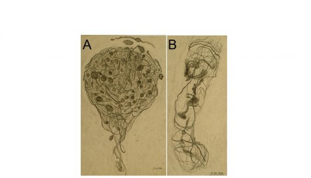 Dibujos originales de Conchita del Valle que ilustran detalles de las terminaciones nerviosas del clítoris.