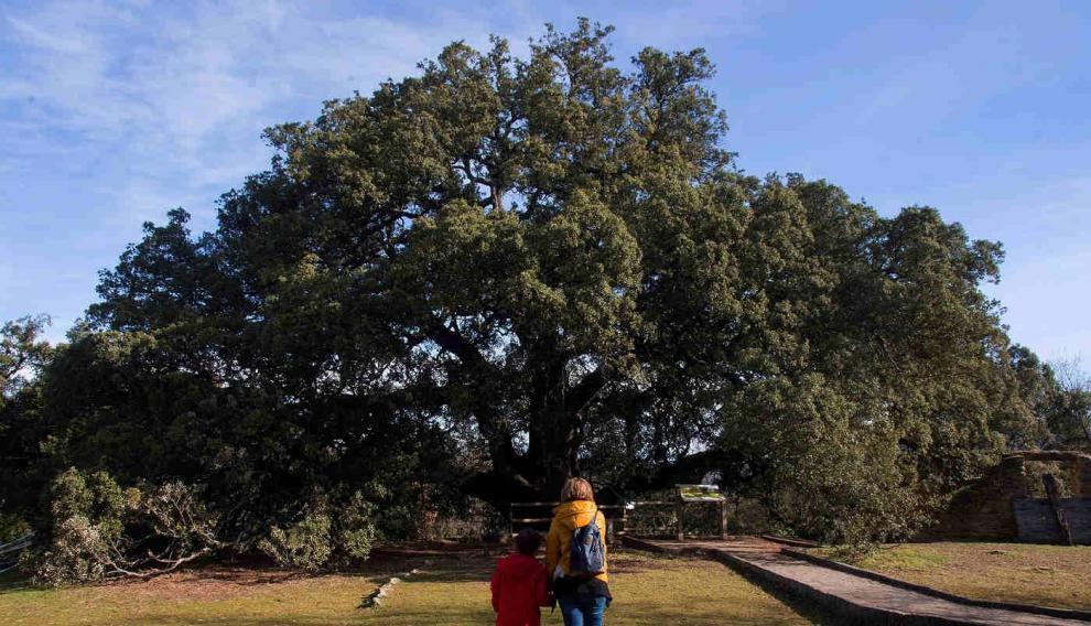 Dos personas observan la encina milenaria, Carrasca de Lecina, en la provincia de Huesca, que es candidata a ser el árbol europeo del año 2021.