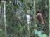 En el vídeo aparece talando un árbol con un hacha
