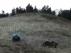 Imagen de la osa saliendo de la jaula que fue transportada hasta el monte por un helicóptero de la Gendarmeria