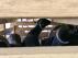 Algunas de las cabras en el interior de las cajas en las que han sido transportadas.