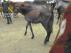 Los caballos estaban desnutridos y deshidratados.
