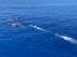 Migrantes del Open Arms se lanzan al agua para alcanzar Lampedusa.