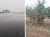 La granizada afectó a los frutales de la zona