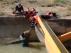 Rescatan a dos corzos atrapados por la corriente en el canal de riego de Calanda.
