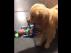 Ben Franklin con uno de los juguetes 'robados'