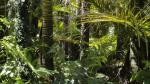 La selva del Amazonas