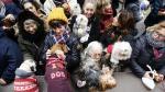 Las mascotas reciben la bendición de San Antón en Zaragoza