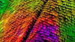 Las delicadas escamas de una mariposa –en esta imagen seleccionada por el certamen Fotciencia– deben su color a su estructura interna