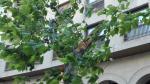 El cierzo azota a los árboles de Plaza Aragón