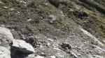 Despeñamiento de ovejas en Ansó