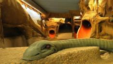 Dinospa para niños