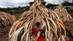 Miembros de las tribus Masai, junto a parte del marfil que se va a incinerar