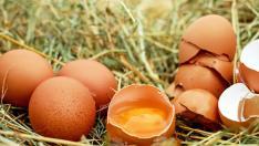Se trata de 50 kilos de huevos en polvo contaminados con fipronil.
