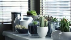 Siete plantas resistentes para tu escritorio que no podrás matar