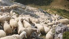 Un rebaño de ovejas en el Pirineo aragonés