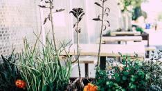 Jardín yplantas