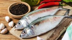 Indian mackerel Rastrelliger kanagurta