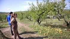Dos vecinos de Moros, Fina Martínez y Víctor Casado, observan una de sus fincas de melocotones.