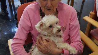 Terapia con perros para 'olvidarse' del alzhéimer