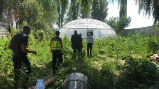 Detenidos un padre y su hijo por un cultivo de marihuana en las Cinco Villas
