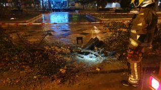 Un árbol cae en el paseo de la Constitución de Zaragoza por las lluvias