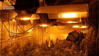 Agentes de la Guardia Civil han detenido a cinco personas por plantar media tonelada de marihuana en Muel, Cadrete y Zaragoza