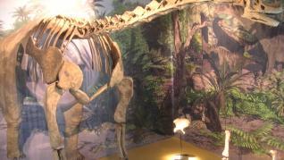 Descubrimiento de un nuevo ejemplar de dinosaurio Turiasaurio en la localidad turolense de Riodeva.
