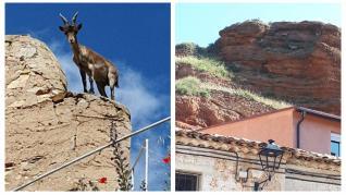 El día en que en Villafeliche vieron a las cabras volar
