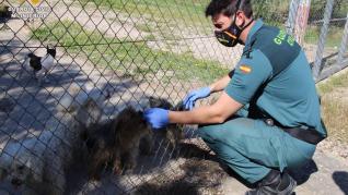 Investigan a dos personas por un delito de maltrato animal en Maella