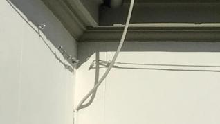 Los Bomberos de Zaragoza han intervenido este viernes en el edificio de Delegación de Gobierno en Aragón, en la plaza del Pilar, para retirar un enjambre de abejas. En la operación, han utilizado técnicas de rescate vertical y un aspirador especial.